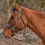 PICNIC BRIDLE or SIMPLE HALTER BRIDLE with CAMOUFLAGE Biothane