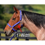 purple Turnout HALTER & LEAD made from BETA BIOTHANE (Solid Colored)