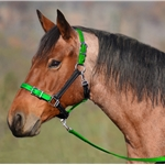 **Green Bean Official Tack*** Buckle Nose Safety HALTER & LEAD made from BETA BIOTHANE (Mix N Match)