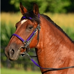purple Traditional HALTER BRIDLE with BIT HANGERS made from BETA BIOTHANE (ANY 2 COLOR COMBO)