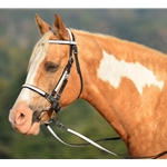 whiteoverlay Traditional HALTER BRIDLE with BIT HANGERS made from BETA BIOTHANE (ANY 2 COLOR COMBO)