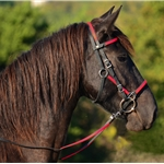 maroon (burgundy/wine)  Quick Change HALTER BRIDLE with Snap On Browband made from BETA BIOTHANE (ANY 2 COLOR COMBO)