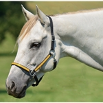 yellow (bright/canary) Quick Change HALTER BRIDLE with Snap On Browband made from BETA BIOTHANE (ANY 2 COLOR COMBO)