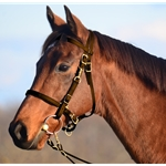 BROWN Traditional HALTER BRIDLE with BIT HANGERS made from BETA BIOTHANE