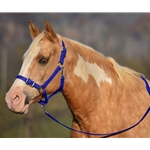 DARK BLUE Buckle Nose Halter & Lead Beta Biothane
