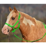 LIME GREEN Buckle Nose Halter & Lead Beta Biothane