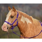 PURPLE Buckle Nose Halter & Lead Beta Biothane