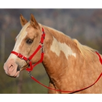 RED Buckle Nose Halter & Lead Beta Biothane
