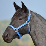 LIGHT BLUE HALTER & LEAD made from BETA BIOTHANE (Solid Colored)