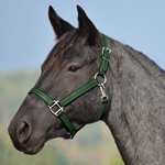 HUNTER GREEN HALTER & LEAD made from BETA BIOTHANE (Solid Colored)