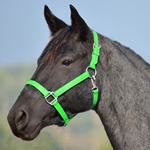 LIME GREEN HALTER & LEAD made from BETA BIOTHANE (Solid Colored)