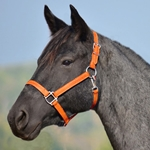 ORANGE HALTER & LEAD made from BETA BIOTHANE (Solid Colored)