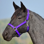 PURPLE HALTER & LEAD made from BETA BIOTHANE (Solid Colored)