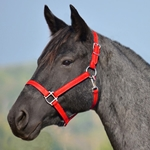 RED HALTER & LEAD made from BETA BIOTHANE (Solid Colored)