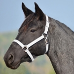 WHITE HALTER & LEAD made from BETA BIOTHANE (Solid Colored)