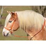 ORANGE GROOMING HALTER & LEAD made from BETA BIOTHANE