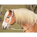 WHITE GROOMING HALTER & LEAD made from BETA BIOTHANE