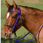 DARK BLUE Snap on Browband WESTERN BRIDLE made from BETA BIOTHANE