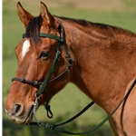 HUNTER GREEN Snap on Browband WESTERN BRIDLE made from BETA BIOTHANE