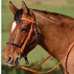ORANGE Snap on Browband WESTERN BRIDLE made from BETA BIOTHANE