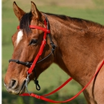 RED Snap on Browband WESTERN BRIDLE made from BETA BIOTHANE