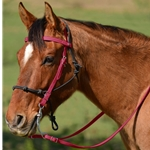 WINE Snap on Browband WESTERN BRIDLE made from BETA BIOTHANE
