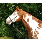 brown Western NOSEBAND & TIE DOWN made from BETA BIOTHANE