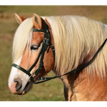 HUNTER GREEN ENGLISH HUNT BRIDLE Made from Beta Biothane
