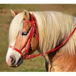 RED ENGLISH HUNT BRIDLE Made from Beta Biothane