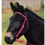 PINK MULE BRIDLE made from BETA BIOTHANE