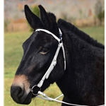 WHITE MULE BRIDLE made from BETA BIOTHANE