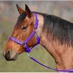 Purple Buckle Nose Halter With Breakaway Crown (Cob Size)