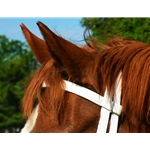 white REGULAR BROWBAND made from BETA BIOTHANE