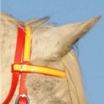 yellow REGULAR BROWBAND made from BETA BIOTHANE