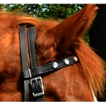 black REGULAR BROWBAND made from BETA BIOTHANE