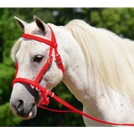 Mini Horse  2 in 1 BITLESS BRIDLES