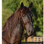 WARMBLOOD/THOROUGHBRED  SIZE English Bridle made from BETA BIOTHANE