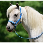 MINI HORSE SIZE Buckle Nose Halter made from BETA BIOTHANE