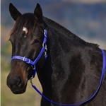 WARMBLOOD/THOROUGHBRED SIZE Buckle Nose Halter made from BETA BIOTHANE