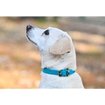 red DOG COLLAR made from BETA BIOTHANE (Solid Colored)