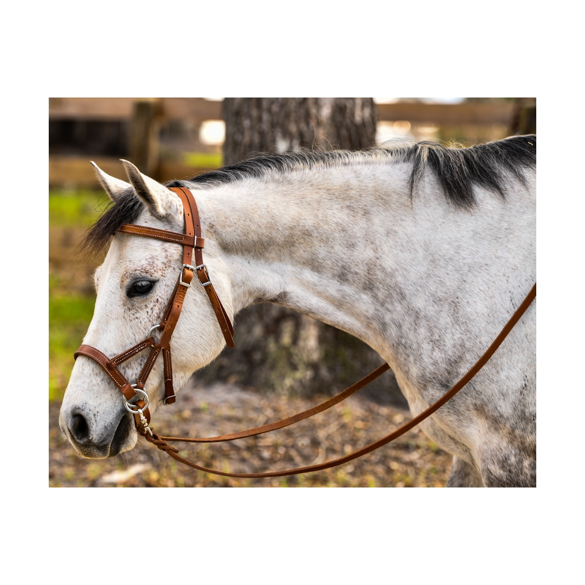 Full Brown With Rains Leather SidePull Bitless Bridle COB