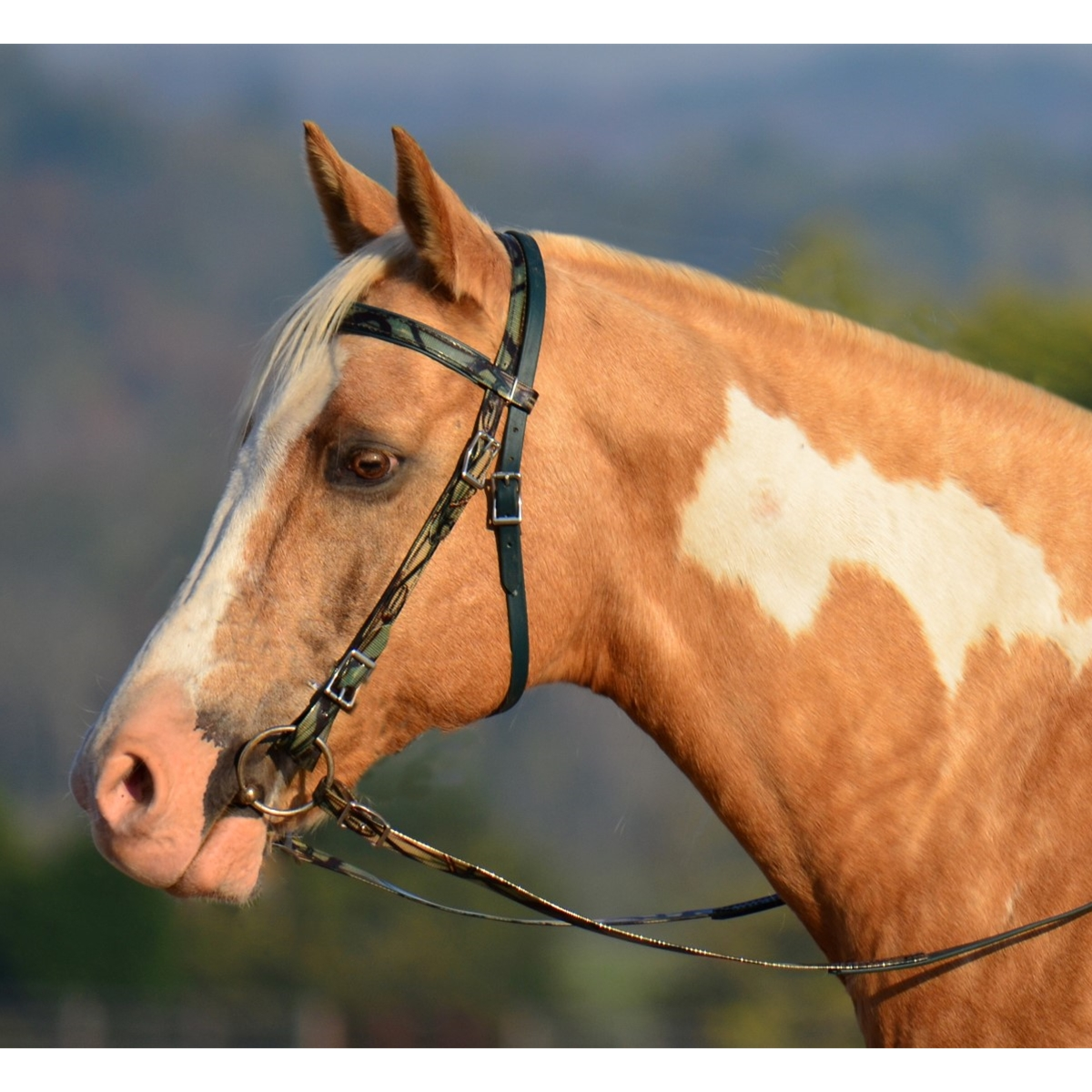 western bridle full browband made with camouflage beta
