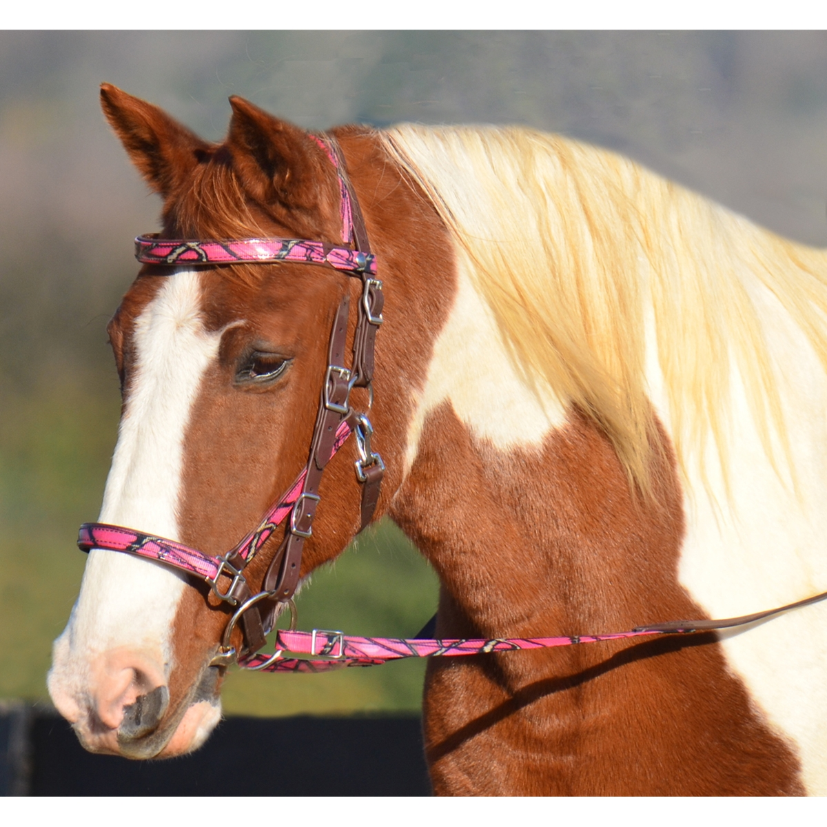 Halter Bridle For Horses With Snap On Browband Two Horse Tack