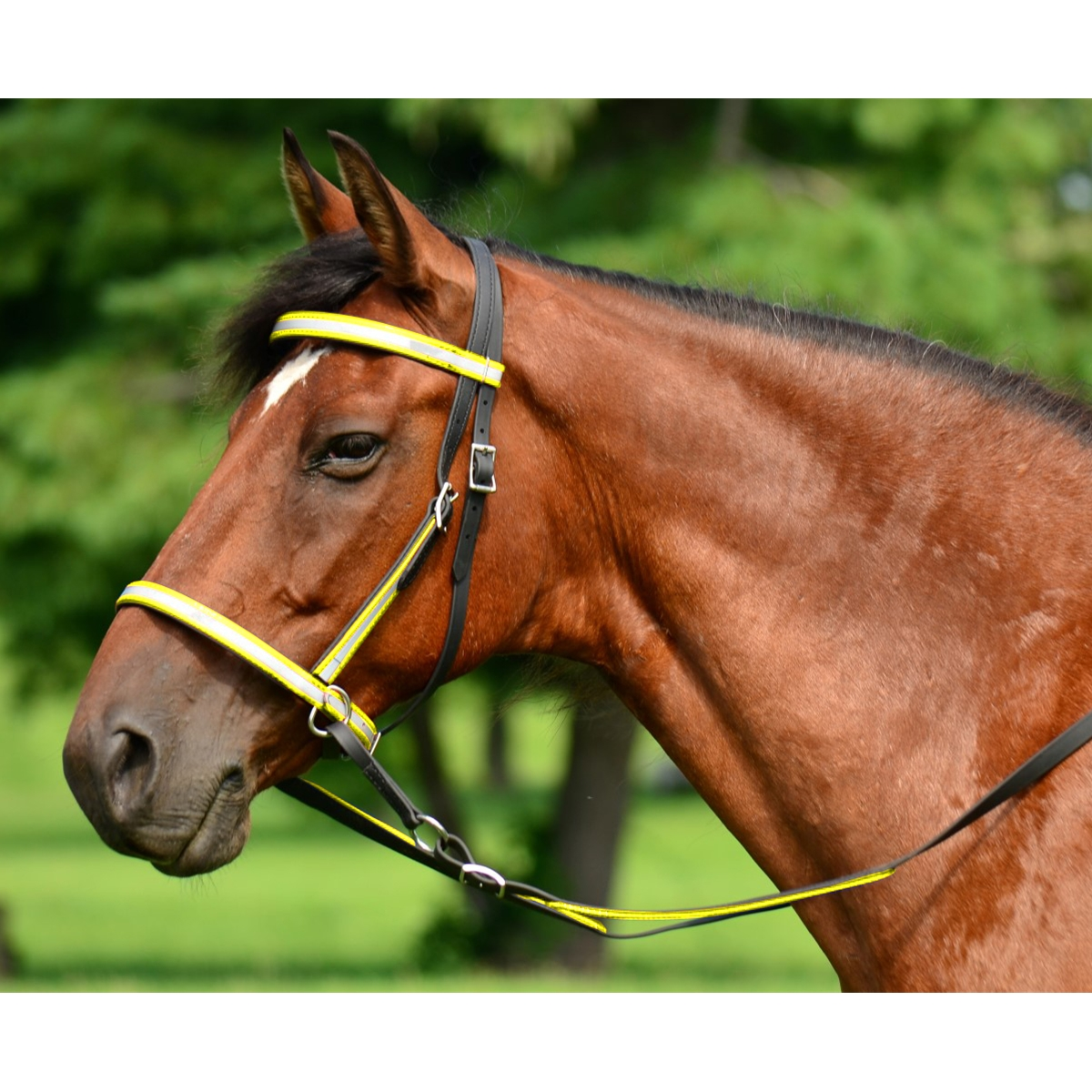 Buy Bitless Bridle Online At Fantastic Prices Two Horse Tack
