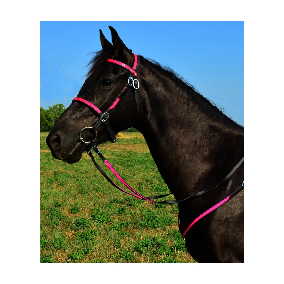 Shop English Bridles For Sale With 2 Color Combination Two Horse Tack