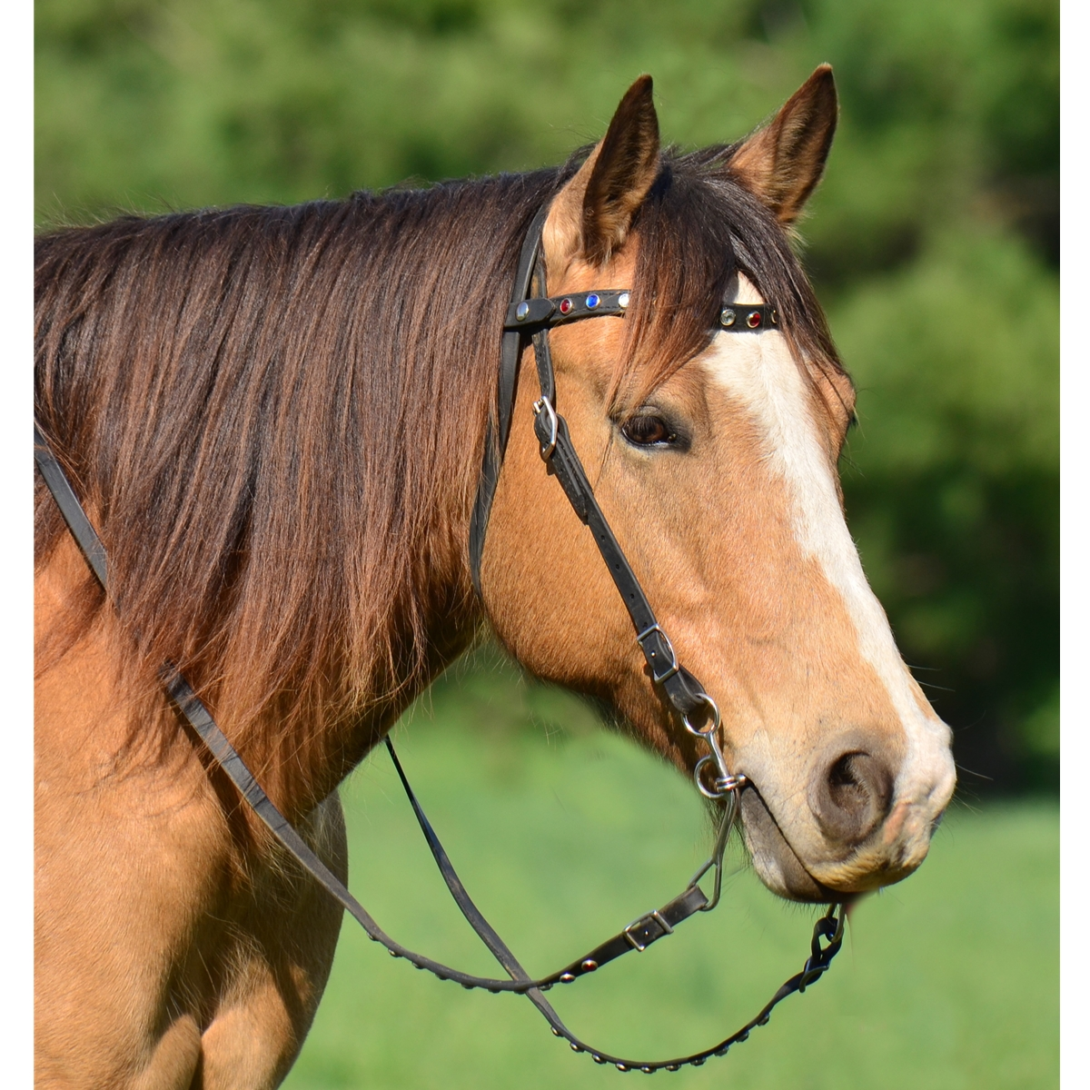 snap on browband western bridle made from beta biothane