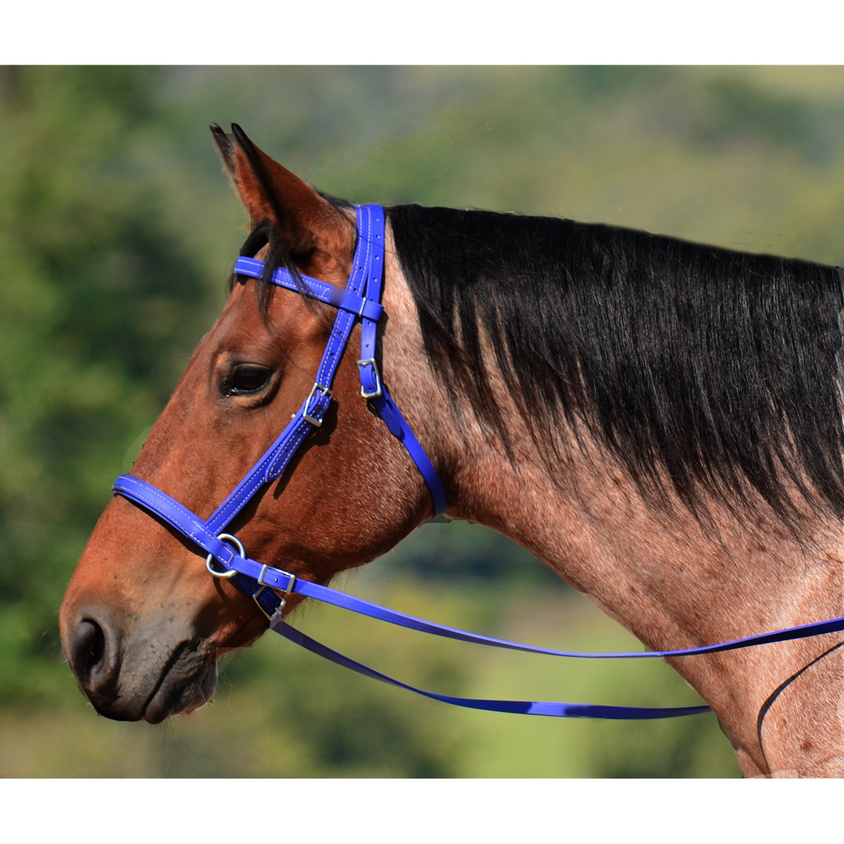 Solid Colored Instock Headstalls with Scissor Snaps