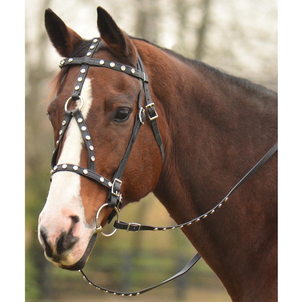 The Two Horse Tack Winners Green Bean Endurance