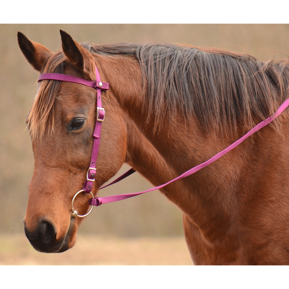 Shop Custom Western Horse Browbands Two Horse Tack