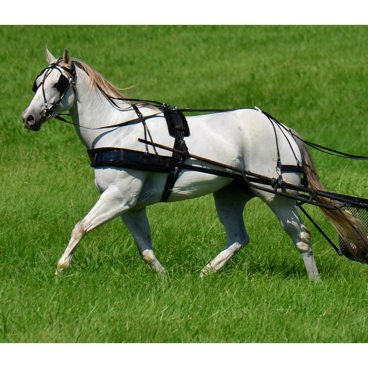 Details about  /Quick Hitch Trotting Driving Harness Made Of Biothane MINI SHETLAND Size
